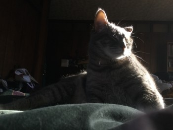 Norathar cat in a sunbeam