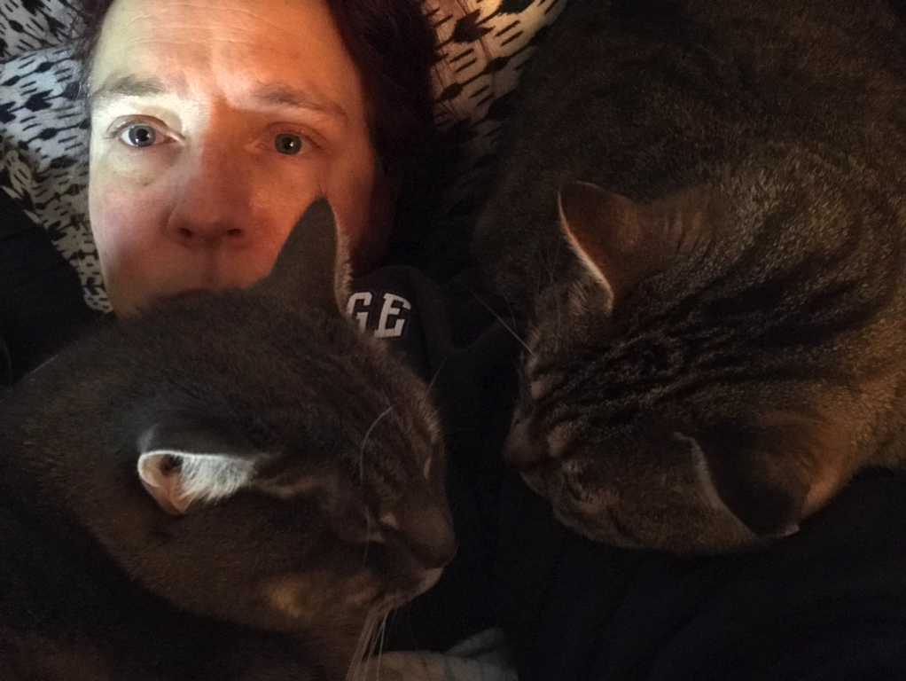 Covered in cats